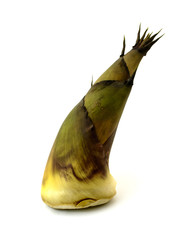Bamboo shoot on the white background