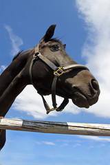 Голова лошади черной масти на фоне голубого неба