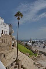 Palmier, port de Tanger, Maroc