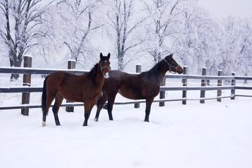 Horses walking in winter