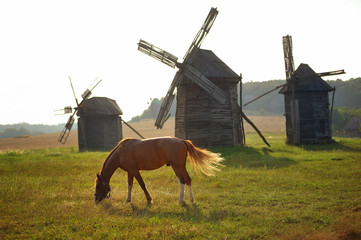 Three historic windmills in a Ukraine landscape with horse