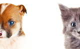 Fototapety Cute cat and dog faces isolated on white