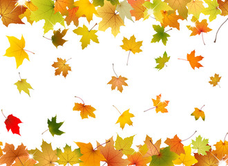 Horizontal seamless pattern of autumn leaves
