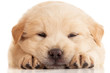 Fluffy Chow-chow puppy, isolated over white
