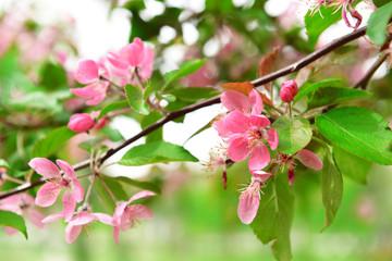 Beautiful blossom outdoors