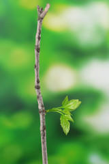 Branch with leaf on bright background