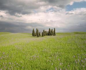 CGI Landscape Tuscany