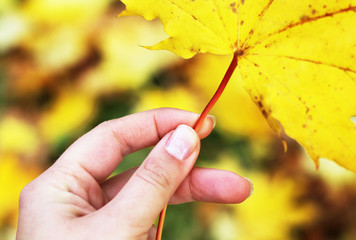 Yellow leaf in the woman hand