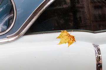 Ahornblatt auf einem regennassen klassischen Automobil