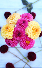 Dahlia flowers in vase on table background