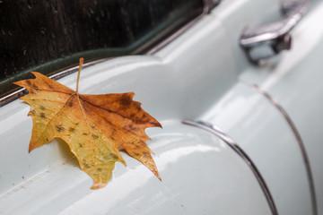 herbstliches Ahornblatt auf nassem klassischen Auto