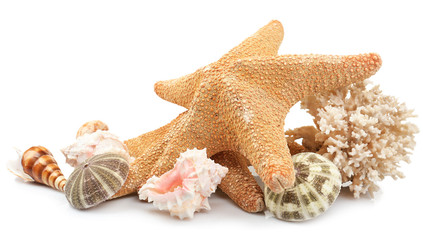 Seashells on sand, isolated on white