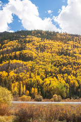 Colorado Aspen Vista