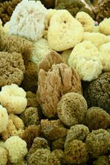Closeup of a natural sponges