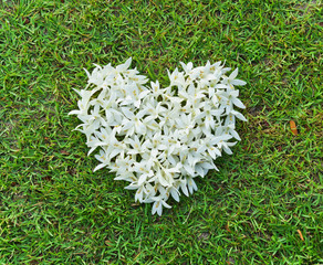 white heart on green grass / pure love for nature