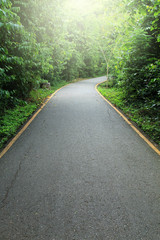 Road to tropical forest