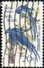 Columbia Jays, John James Audubon, ornithologist and artist
