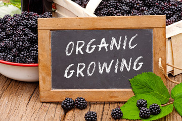 Tafel mit Text: Organic Growing, vor Brombeeren