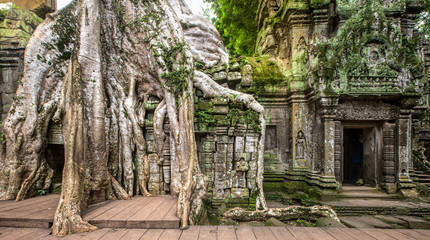 ancient ruins of Ta Prohm