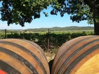 Vineyard and barrels