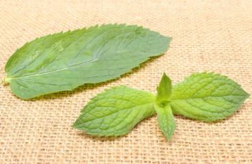 Fresh green mint on burlap texture