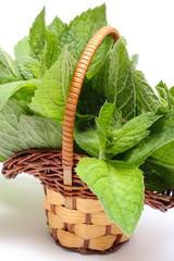 Bunch of fresh green mint in wicker basket on white background
