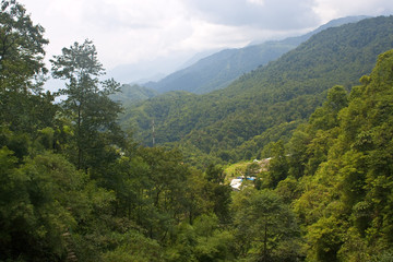 View to the jungle in Vietnam near Sapa