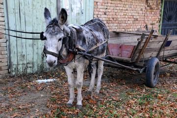 Gray Donkey and Cart