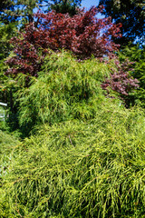Green and Red Trees in Garden