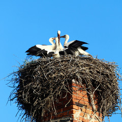Nest with storks