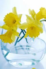beauty, narcissus, decoration, flower, fresh, yellow