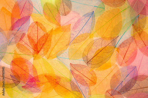 Autumn background - 69161940