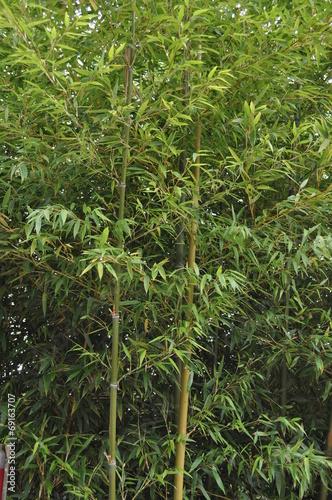 In de dag Bamboo Fôret de bambous