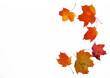 canvas print picture - Rahmen aus Herbstlaub