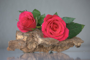 Wood and pink roses