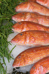 fish at a market