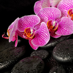 Beautiful spa setting of blooming twig stripped violet orchid (p