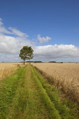 windy agricultural landscape