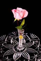 Pink rose in crystal vase