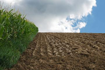 champ labouré avec champ de maïs