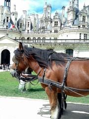 De caballos y castillos
