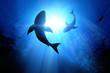 Leinwandbild Motiv Great White Sharks