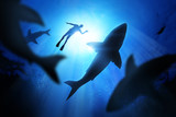 Fototapety Diver And Great White Sharks