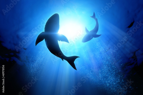 Fotobehang Golven Great White Sharks