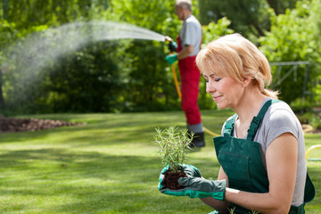 Gardeners plant flowers and watering grass