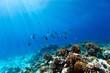 Coral reef underwater - 69181331