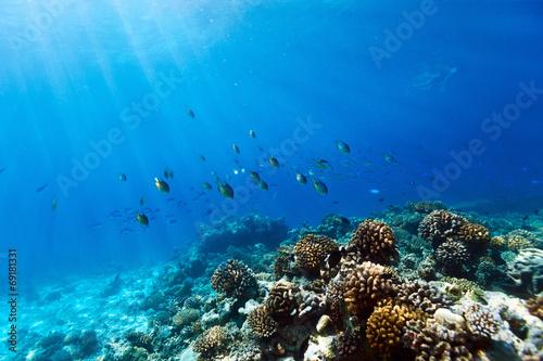 Fotobehang Koraalriffen Coral reef underwater