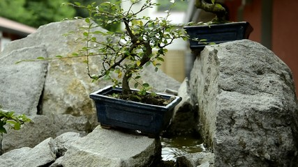 분재 Bonsái Bonsai Μπονσάι 盆栽 Бонсай 盆景 Bonsaï