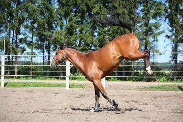 Horse playing in the paddock