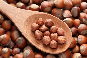Hazelnuts in a wooden spoon